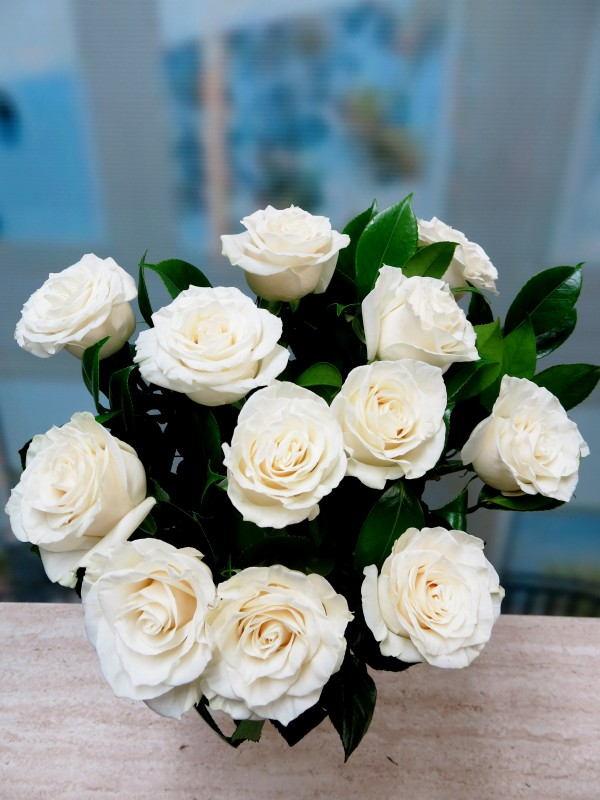Bouquet of 12 white roses short stem - Foto principal
