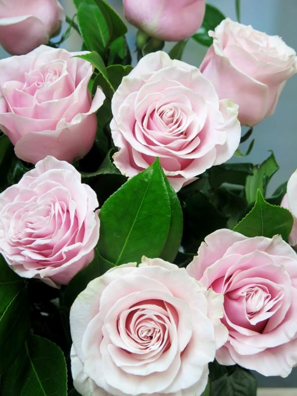 Bouquet 12 Rosas de color rosa - Foto 2